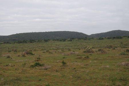 Suchbild, Giraffe Nashorn mit Kind, Gnus